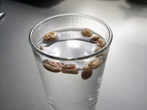 Kaffeesamen im Wasser