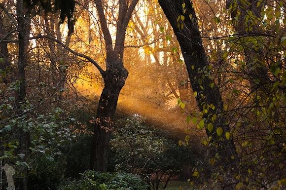 Majestätische Wälder oder Gartenfläche?