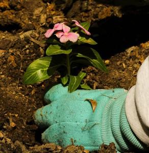 """Statt Samen bereits """"fertige"""" Blumen aus dem Baumarkt kaufen."""