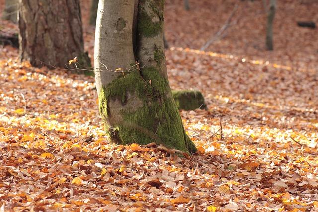 Laub im Wald wirkt wundervoll - und als natürlicher Nährstoff.