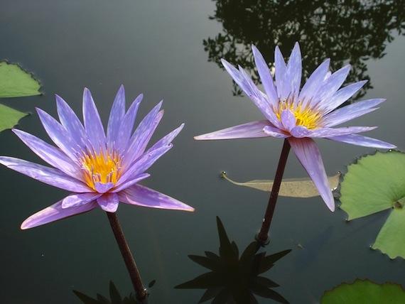 Ein Teich: Wundervoll im Frühling und Herbst, ein Magnet für Mücken im Sommer.