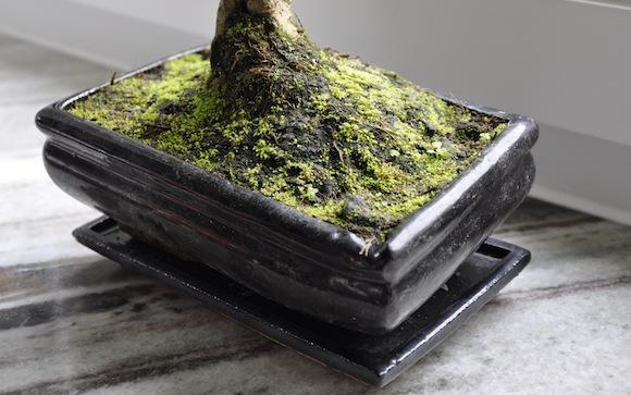 Die benötigte feuchte Erde fördert Moos und schafft eine angenehme Kombination.
