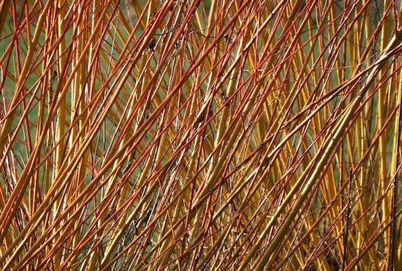 Einfach Zweige als Sichtschutz verwenden.