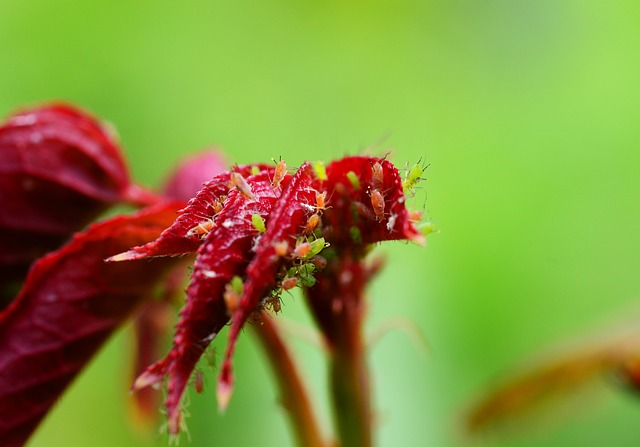 giftige pflanzen im garten erste hilfe garden blog. Black Bedroom Furniture Sets. Home Design Ideas