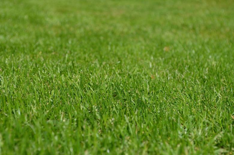 Dafür machen wir uns die Arbeit: Einen gesunden grünen und dichten Rasen.